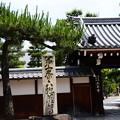 上善寺の松
