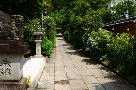 紫陽花咲く大豊神社参道