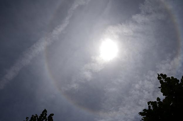 ガーデンミュージアム比叡で見た日暈