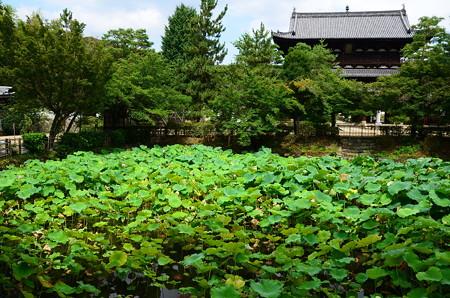 万福寺蓮池