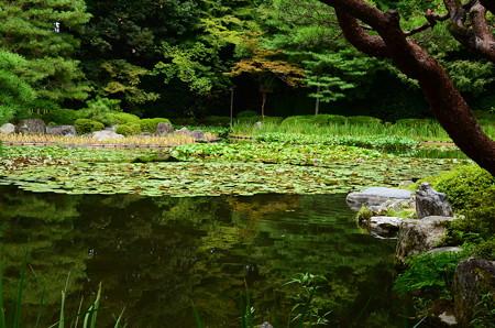 晩夏の白虎池