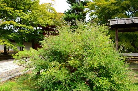 総門前の萩