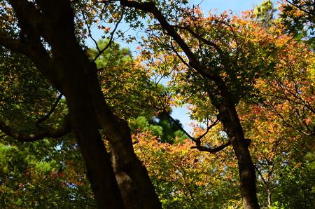 色付き始めた府立植物園