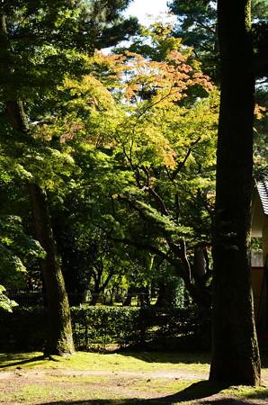 色付き始めた京都御苑