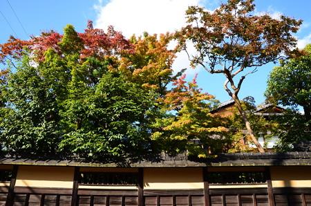 色付き始めた京の街