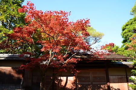 秋空と紅葉~