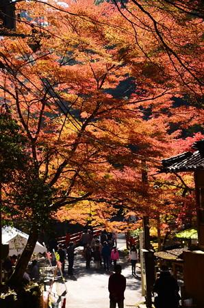 高雄橋を彩る紅葉