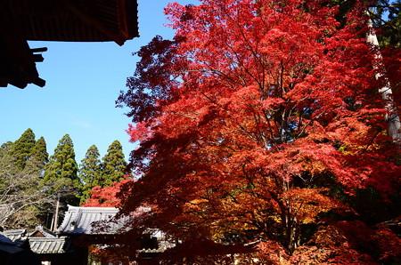 楼門前の紅葉