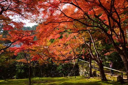 地蔵院前の紅葉