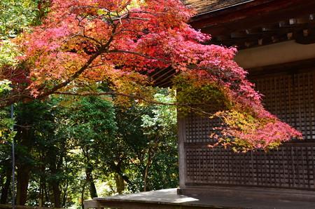大師堂を彩る紅葉