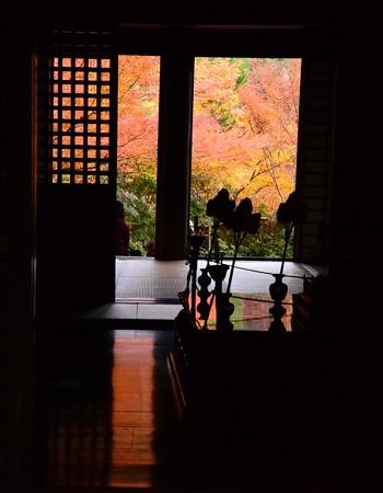 床を染める紅葉
