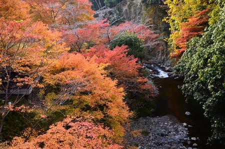 清滝川を飾る紅葉