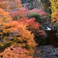 Photos: 清滝川を飾る紅葉