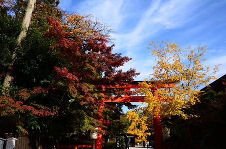 色付き始めた下鴨神社