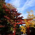 Photos: 色付き始めた下鴨神社