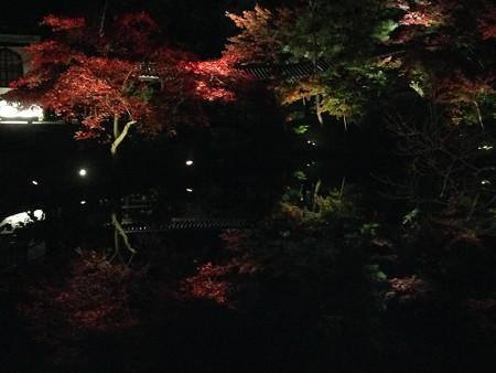 池脇のライトアップ