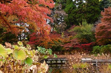 紫陽花園の色付き