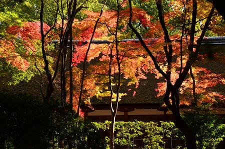 渉渓園の色付き