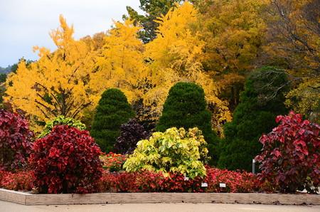 公孫樹のある秋景