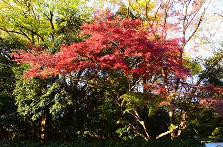 御蔭通り脇の紅葉