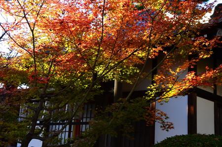 本満寺の色付き