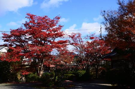神光院の紅葉景色