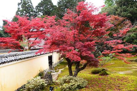 本庭の紅葉