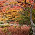 紅葉に埋もれる宝筐院