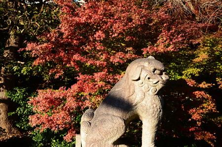晴明神社の色付き