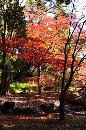 生態園の紅葉