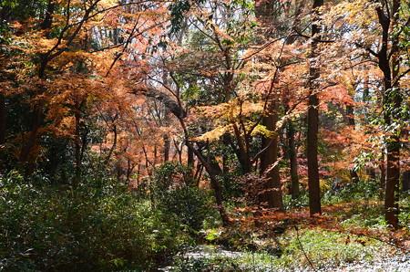 泉川の紅葉