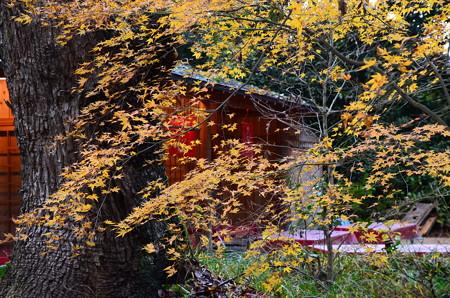 お休み処脇の黄葉