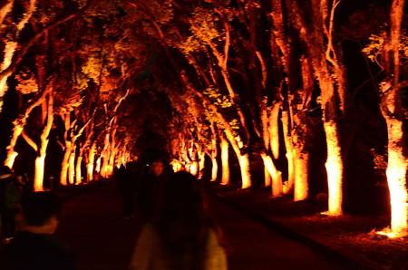 楠並木のイルミネーション