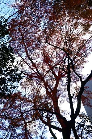 西参道の紅葉