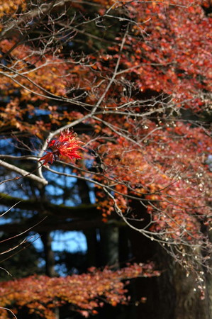 梅林脇の残り紅葉