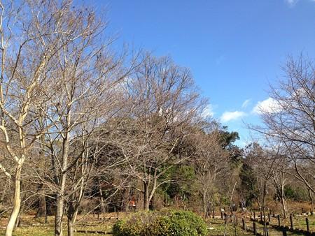 府立植物園の冬空