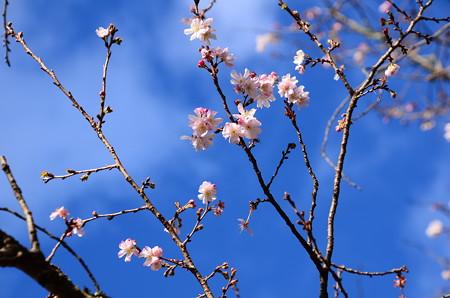 初春の空を~