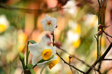 早春のコラボ