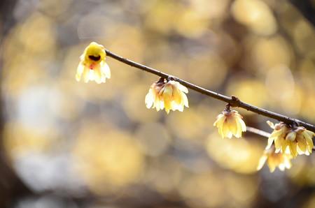 春を待つ灯火