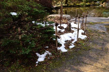 まだ雪の残る生態園