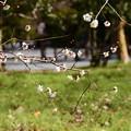 写真: 白梅のある風景