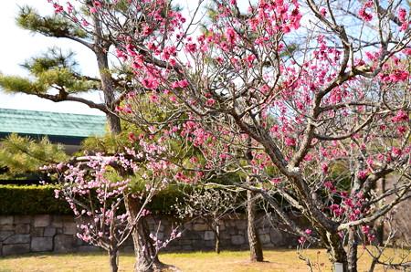 日本庭園梅林
