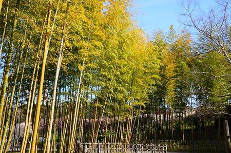 竹藪の奥の梅林