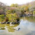 写真: 早春の心字池