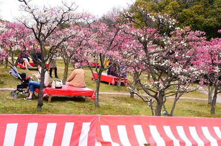 梅小路公園・梅まつり