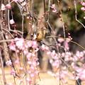 写真: 美女に花を添えて~