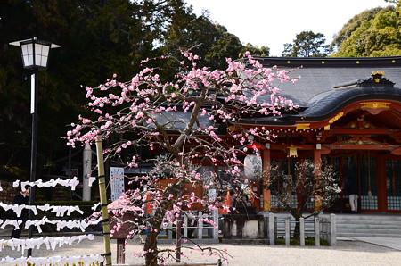 本殿と枝垂れ梅