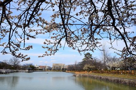 八丈ヶ池の梅