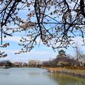 写真: 八丈ヶ池の梅