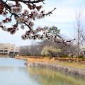 写真: 八丈ヶ池と梅